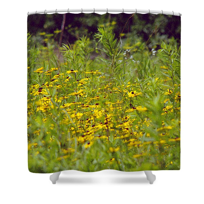 Nature Shower Curtain featuring the photograph Susans in a Green Field by Randy Oberg