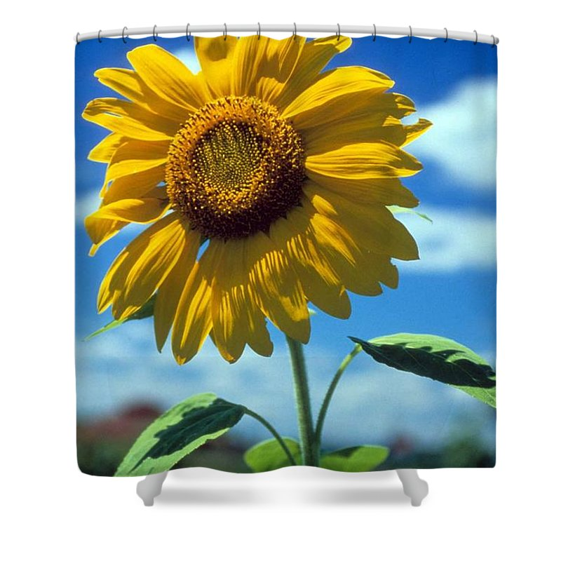 Sussex County Shower Curtain featuring the photograph Sussex County Sunflower by Laurie Paci