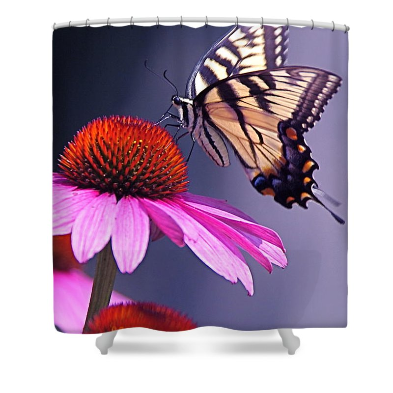 Eastern Shower Curtain featuring the photograph Swallowtail And Coneflower by Byron Varvarigos