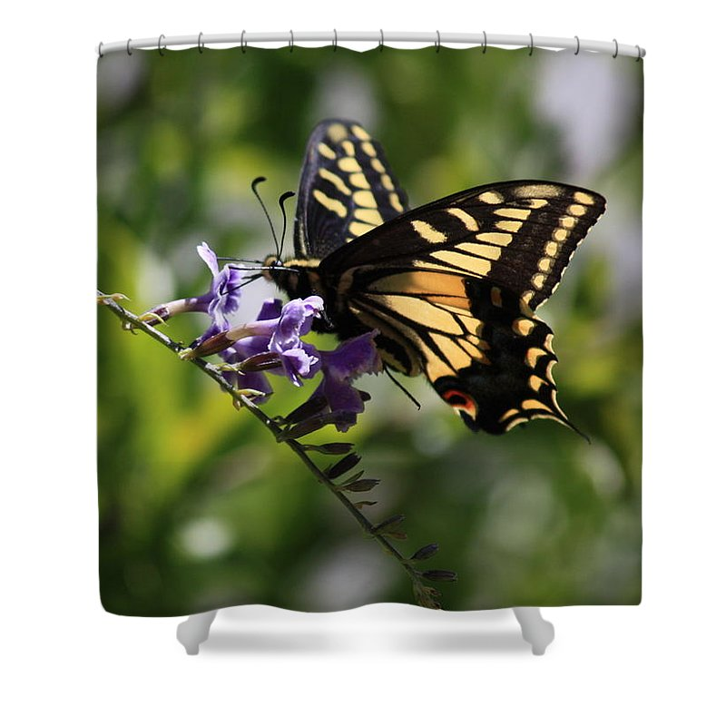 Swallowtail Butterfly Shower Curtain featuring the photograph Swallowtail Butterfly 1 by Carol Groenen