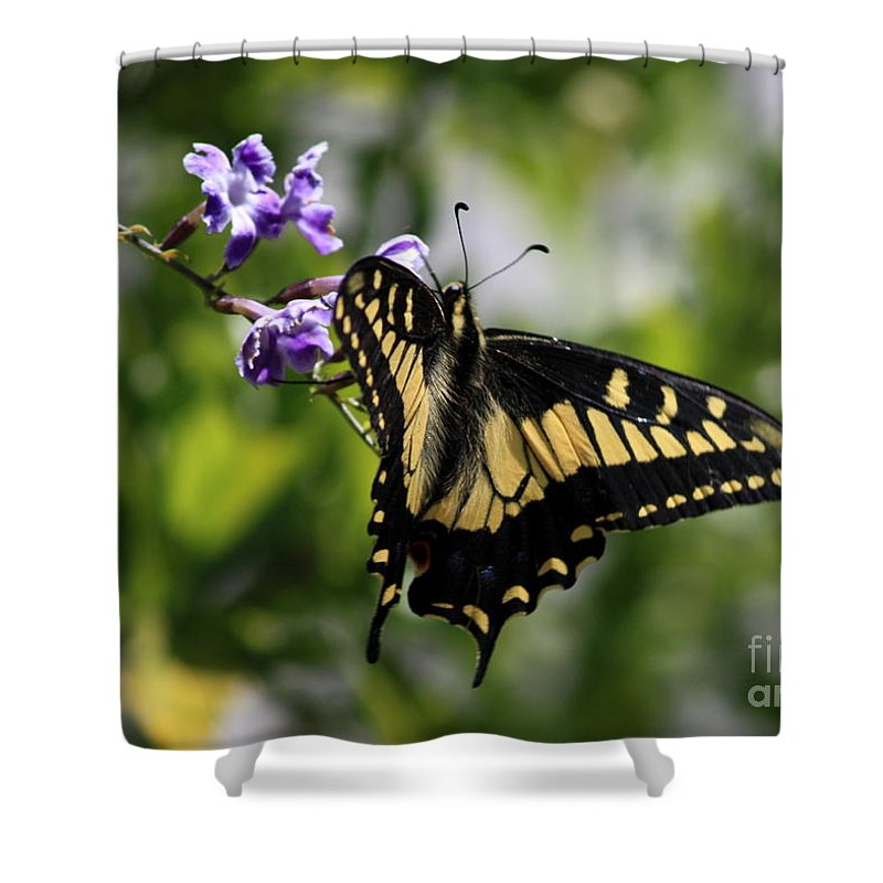 Swallowtail Butterfly Shower Curtain featuring the photograph Swallowtail Butterfly 2 by Carol Groenen