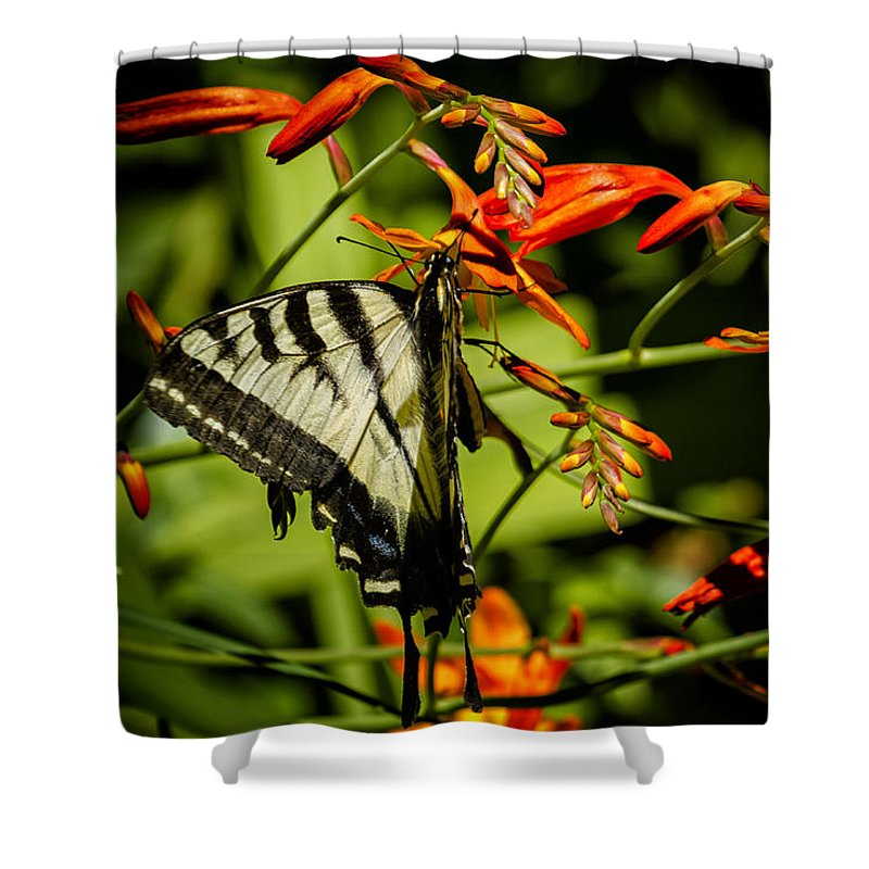 Butterfly Shower Curtain featuring the photograph Swallowtail Hanging On The Crocosmia by Belinda Greb