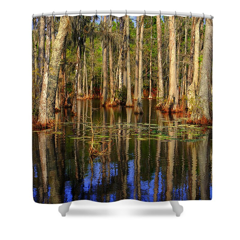Swamp Shower Curtain featuring the photograph Swamp Trees by Susanne Van Hulst