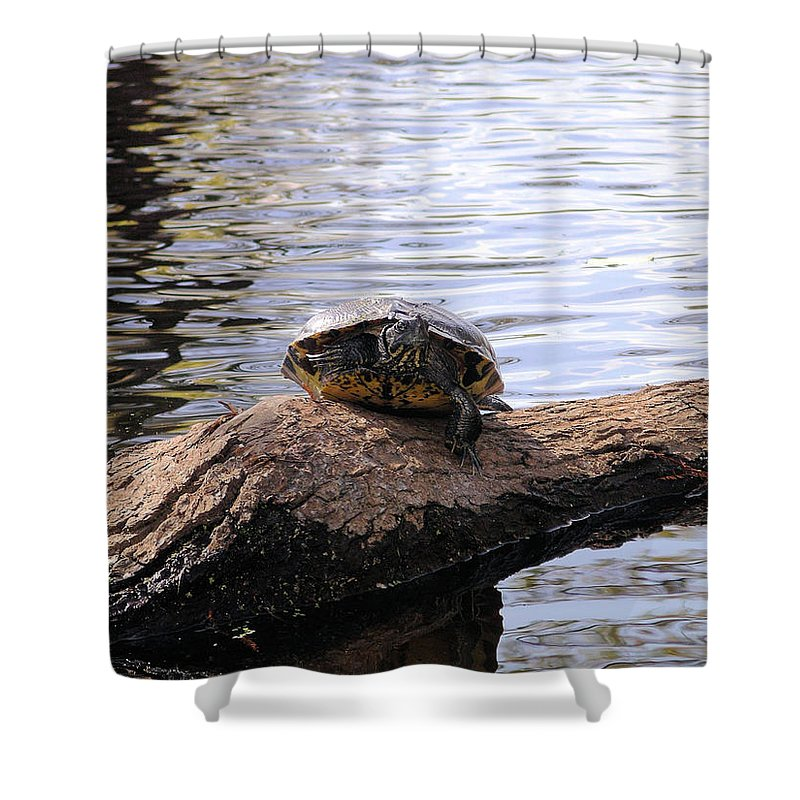 Turtle Shower Curtain featuring the photograph Swamp Turtle by Rich Bodane