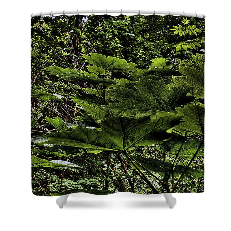 Swan Creek Shower Curtain featuring the photograph Swan Creek Foliage by David Patterson