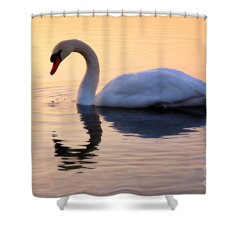 Avian Shower Curtain featuring the photograph Swan Lake by Joe Ng