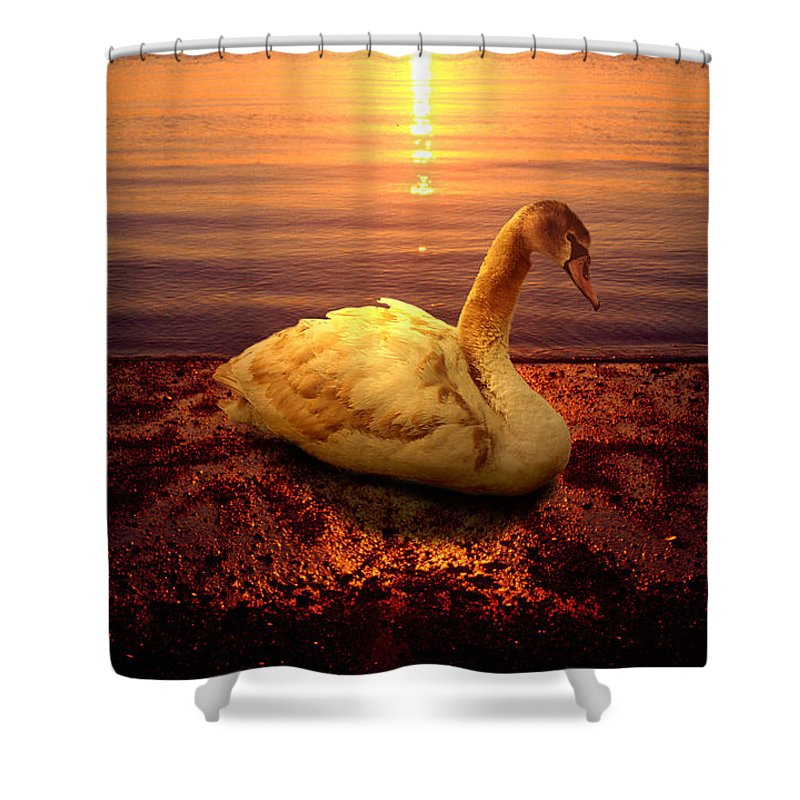 Animal Shower Curtain featuring the photograph Swan Lake by Yuri Lev