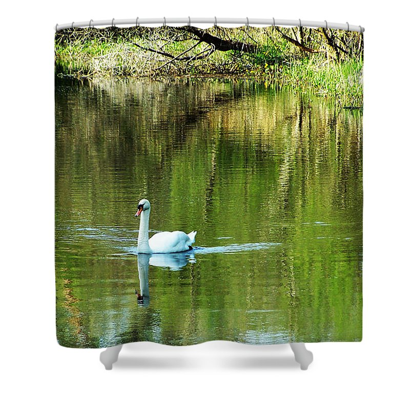 Irish Shower Curtain featuring the photograph Swan On The Cong River Cong Ireland by Teresa Mucha