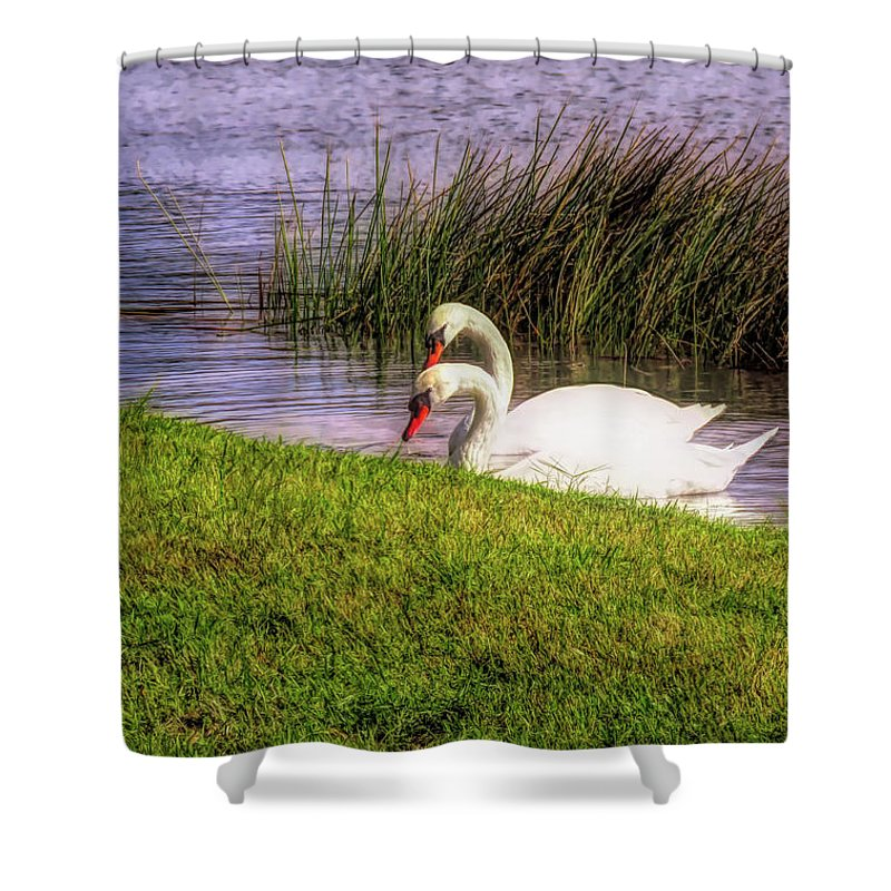 Swan Shower Curtain featuring the photograph Swan Pair Warm Color by Rosalie Scanlon