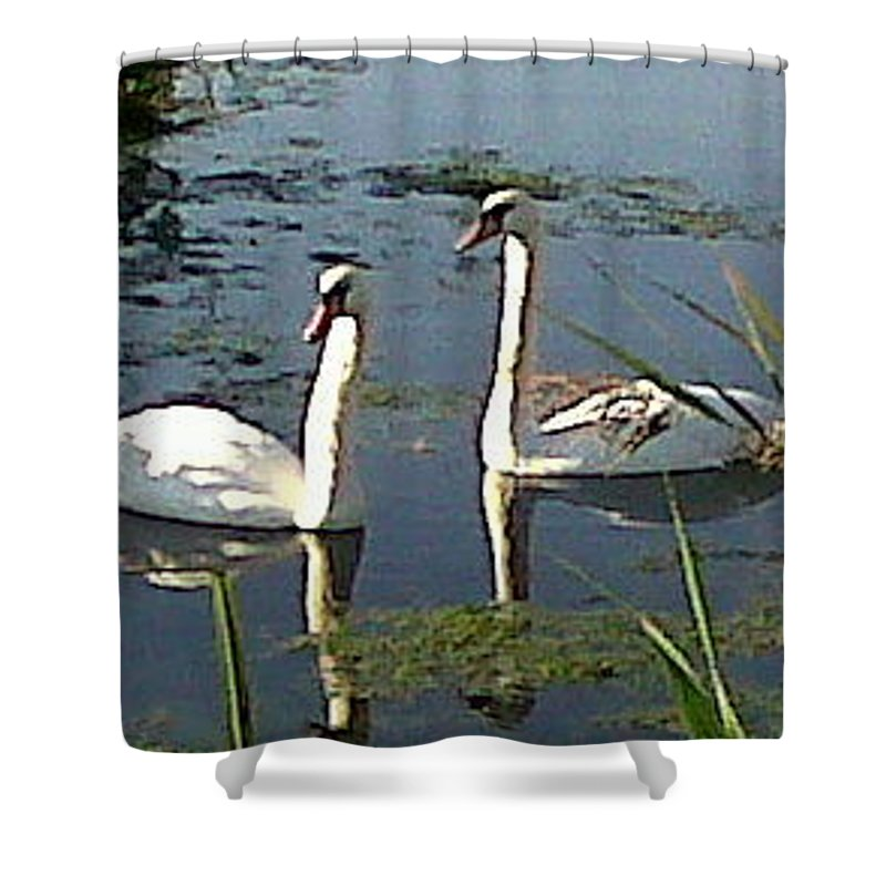 Swans Shower Curtain featuring the photograph Swans In The Sunshine by Susan Baker