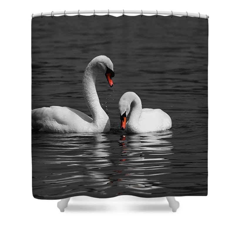 Swan Shower Curtain featuring the photograph Swans Swimming Isolation by Chris Day