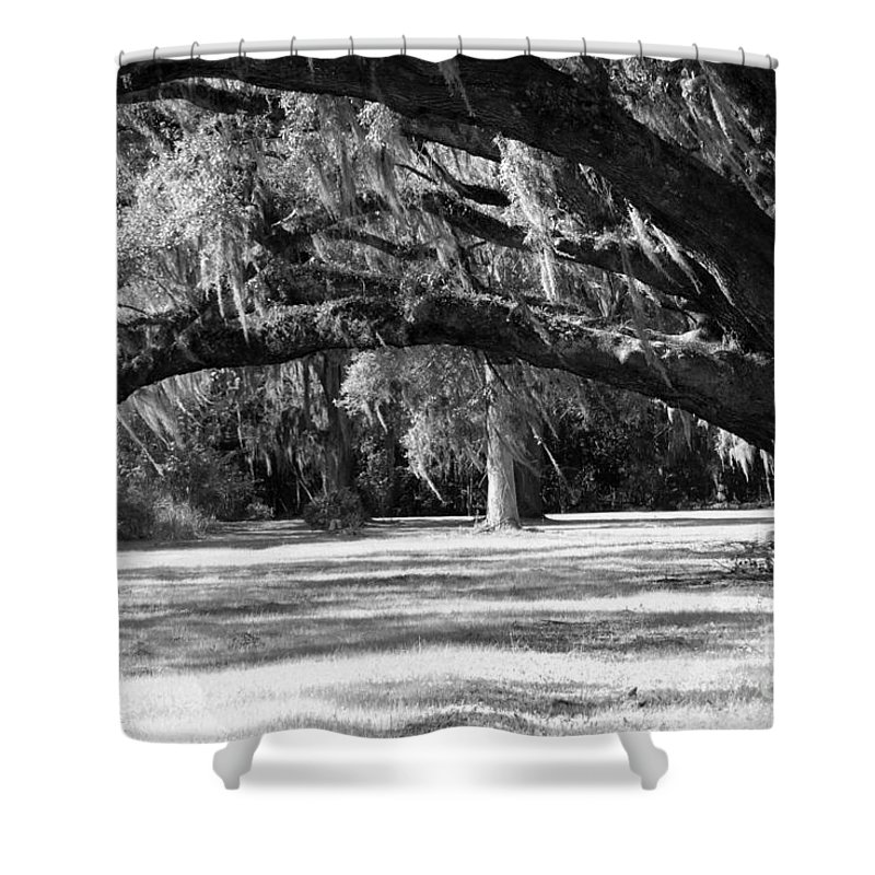 Swaying Oak Shower Curtain featuring the photograph Swaying Oak by Melody Jones
