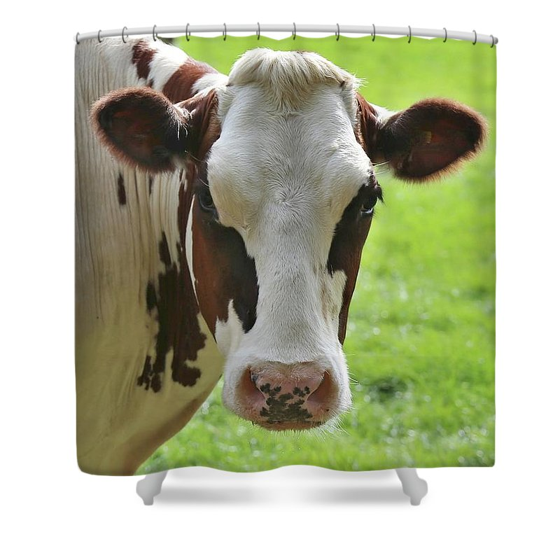 Sweet Cow Face 2 Shower Curtain
