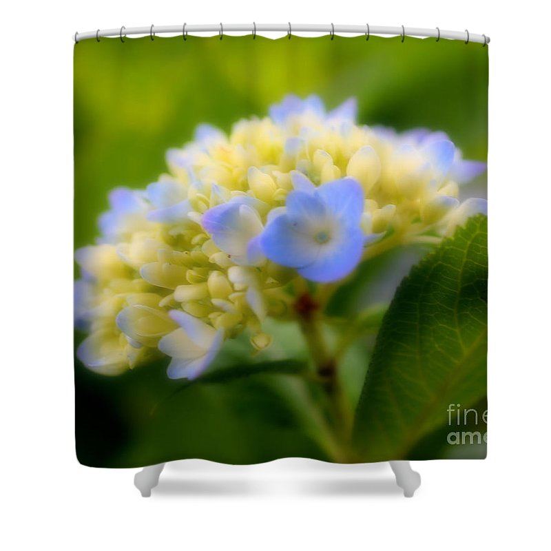 Flower Shower Curtain featuring the photograph Sweet Hydrangea by Smilin Eyes Treasures