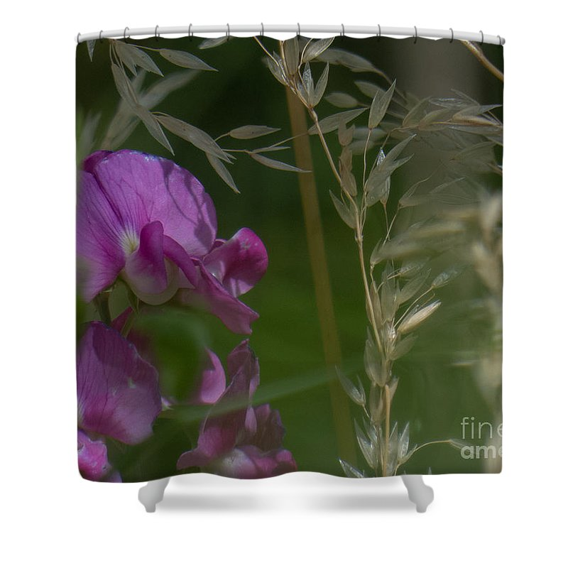 Garavetto Shower Curtain featuring the photograph Sweet Pea 1 by Christy Garavetto