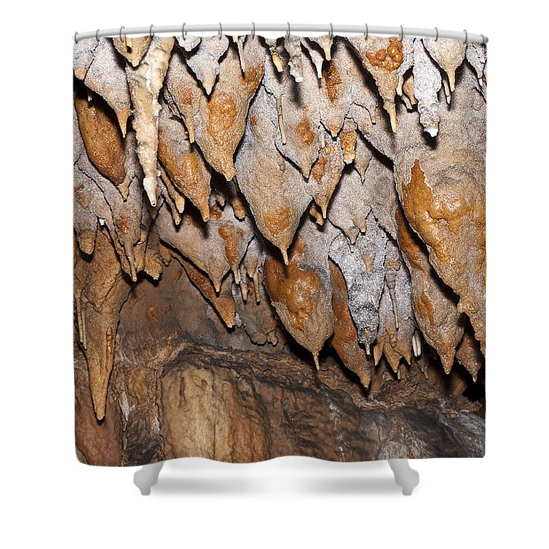 Nature Shower Curtain featuring the photograph Sweet Potatoes by Kenneth Albin