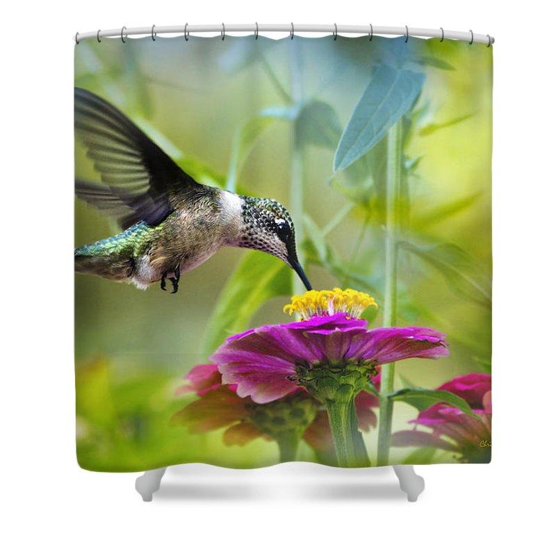 Beautiful Hummingbird Shower Curtains