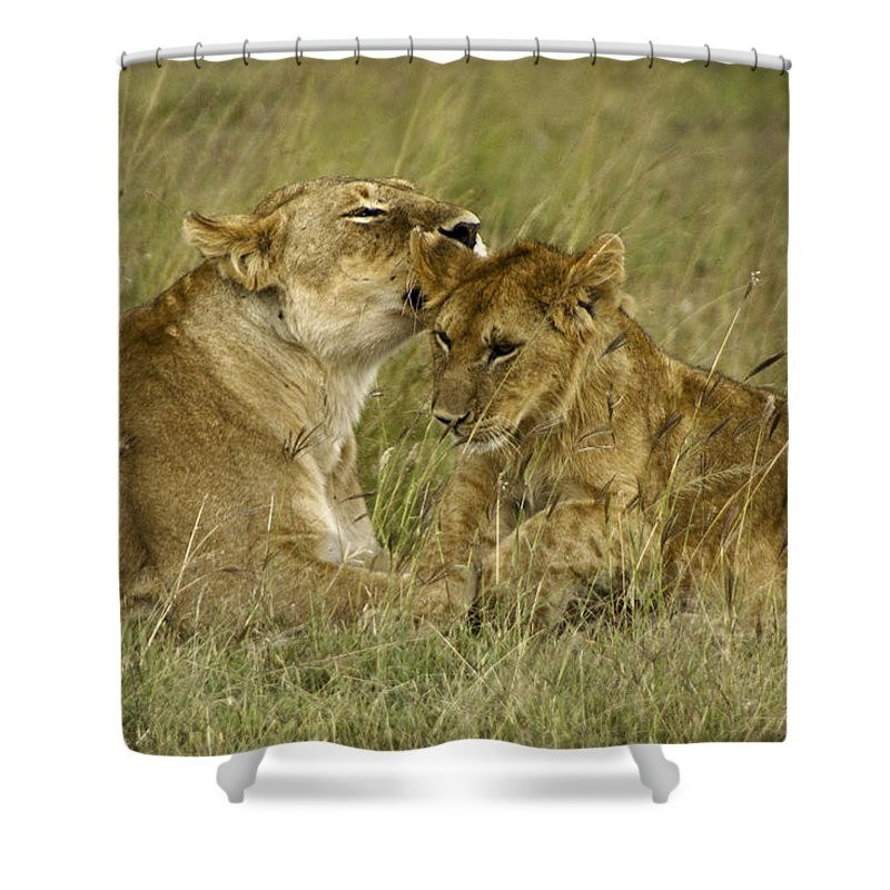 Africa Shower Curtain featuring the photograph Sweet Thing by Michele Burgess