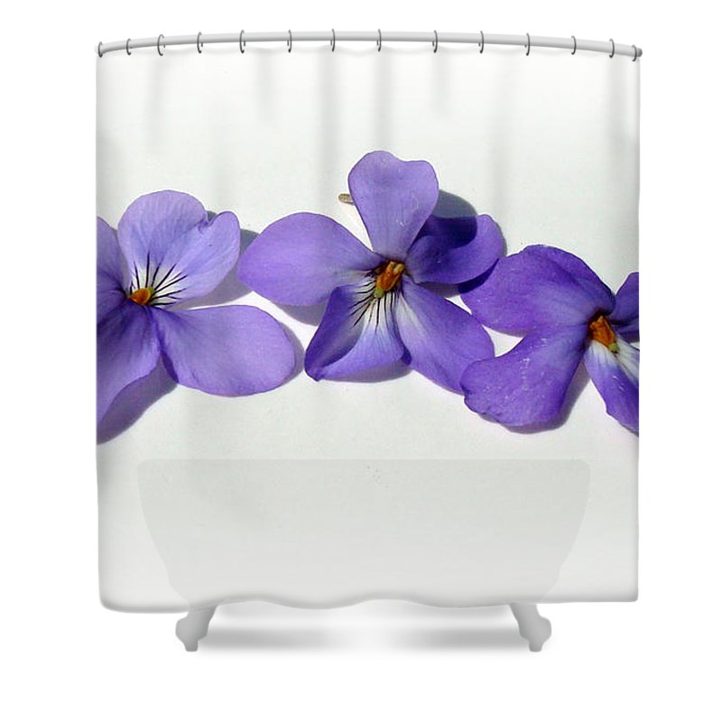 Kathy Bucari Shower Curtain featuring the photograph Sweet Violet by Kathy Bucari