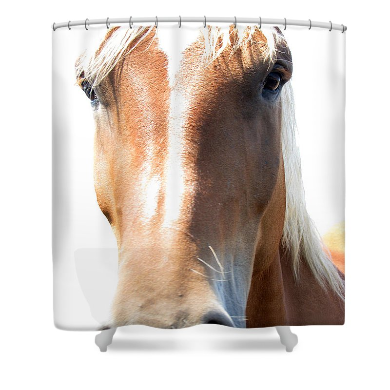 Horse Shower Curtain featuring the photograph Sweetie by Amanda Barcon