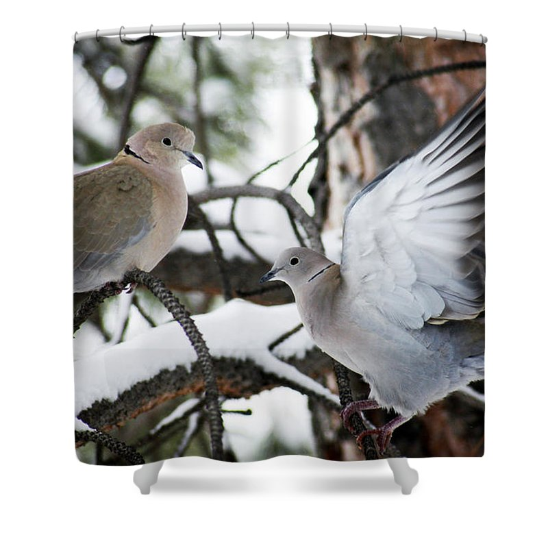Dove Shower Curtain featuring the photograph Sweetness in the Trees by Marilyn Hunt