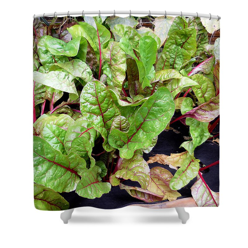 Silver Beet Shower Curtain featuring the painting Swiss Chard In A Vegetable Garden 1 by Jeelan Clark