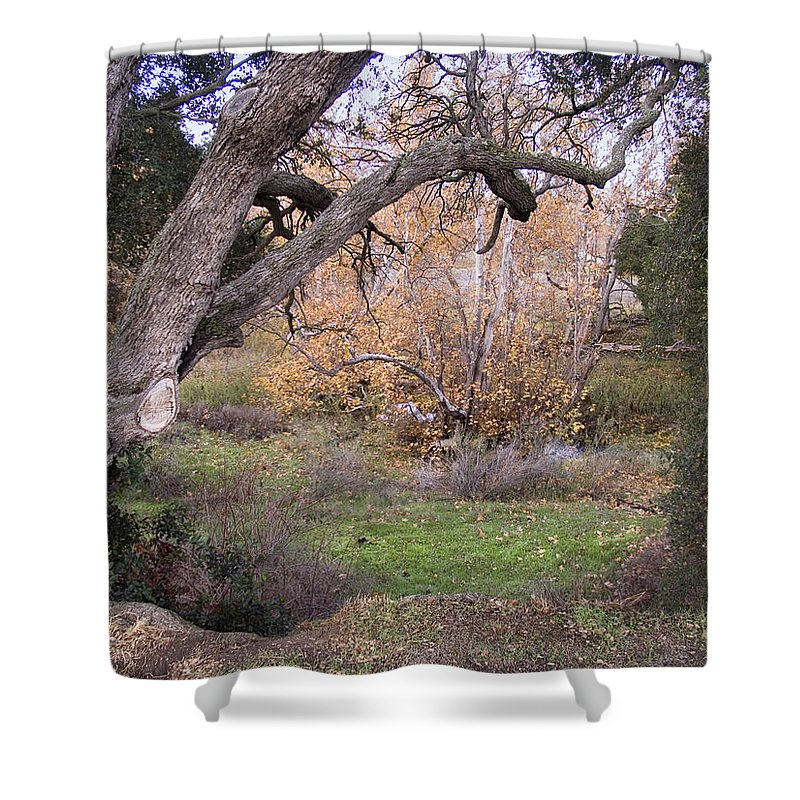 Landscape Shower Curtain featuring the photograph Sycamore Grove Fall by Karen W Meyer