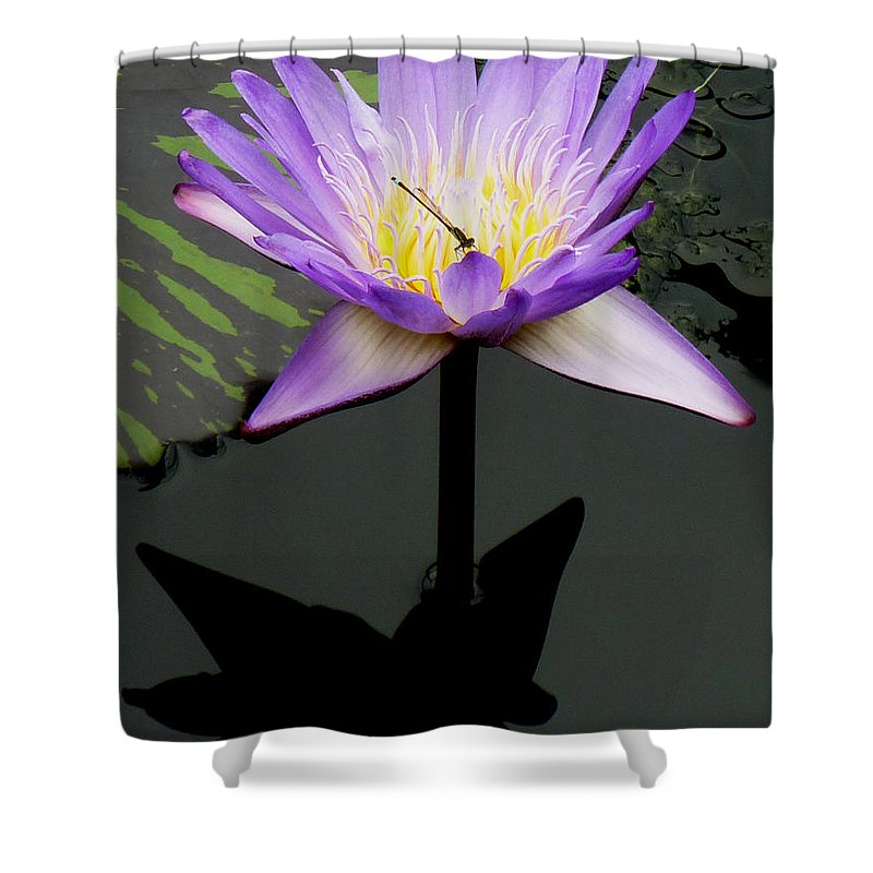 Insect Shower Curtain featuring the photograph Symbiosis by Baato