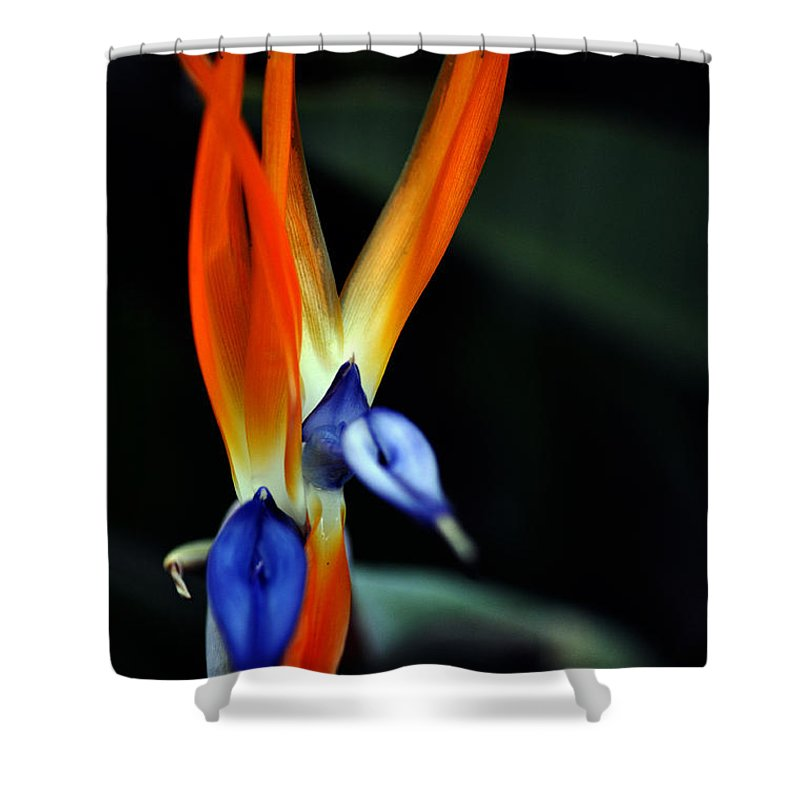 Clay Shower Curtain featuring the photograph Taking Aim by Clayton Bruster