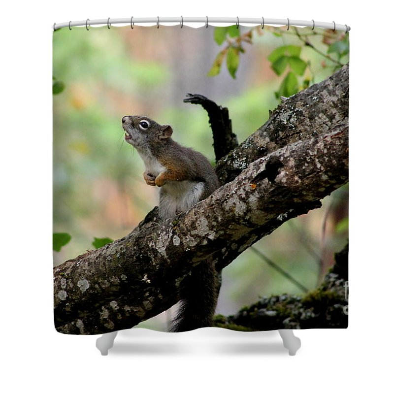 Squirrel Shower Curtain featuring the photograph Talking Squirrel by Leone Lund