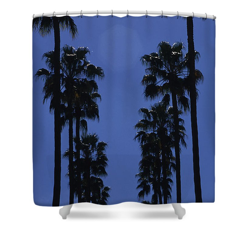 Tempe Shower Curtain featuring the photograph Tall Palm Trees In A Row by Stacy Gold