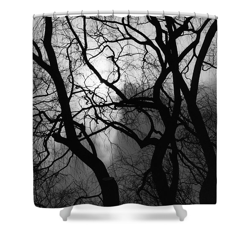 Tree Shower Curtain featuring the photograph Tangled Trees by Phill Doherty