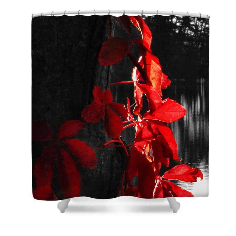 Close Up Shower Curtain featuring the photograph Tangled Up by September Stone