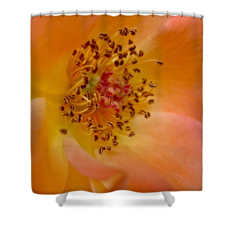 Photograph Of Rose Shower Curtain featuring the photograph Tango by Gwyn Newcombe