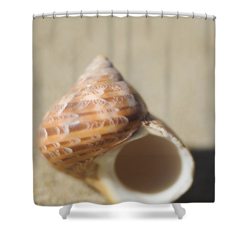 Background Shower Curtain featuring the photograph Tapestry Turban Seashell by Mary Van de Ven - Printscapes
