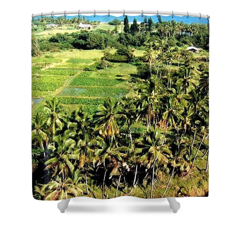 1986 Shower Curtain featuring the photograph Taro Fields by Will Borden