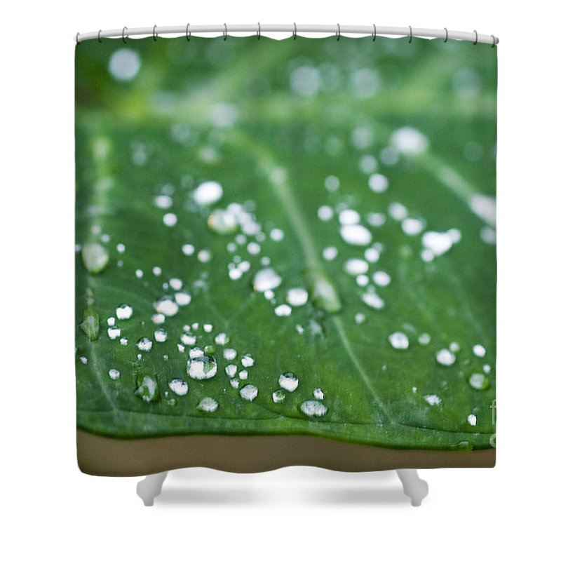Abstract Shower Curtain featuring the photograph Taro Leaf by Allan Seiden - Printscapes