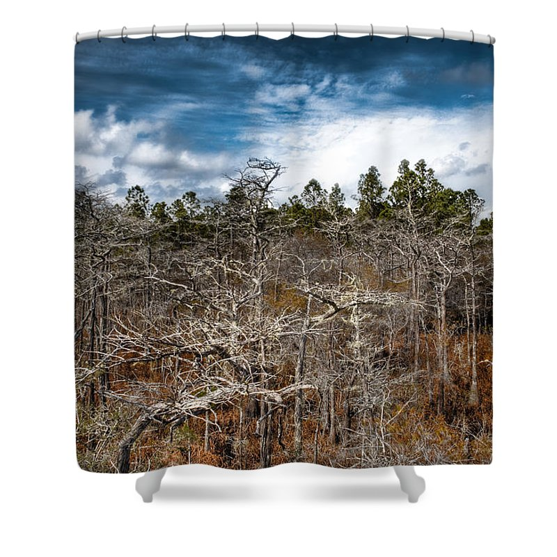 Landscapre Shower Curtain featuring the photograph Tate's Hell State Forest by Rich Leighton