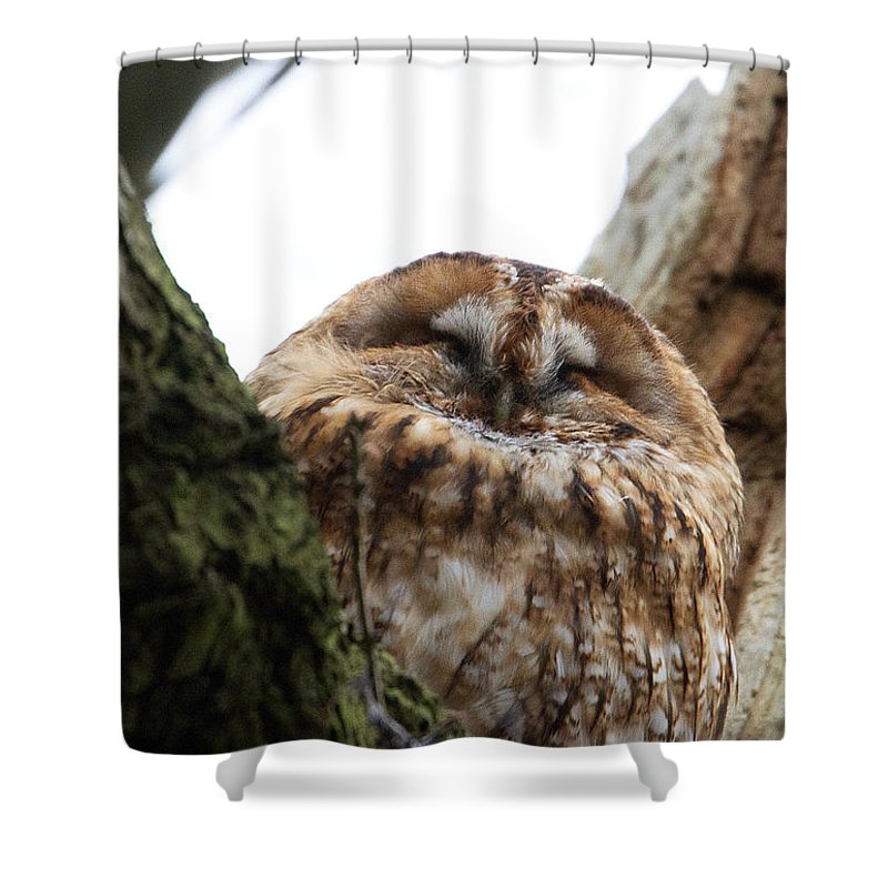 Tawny Owl Shower Curtain featuring the photograph Tawny Owl by Bob Kemp