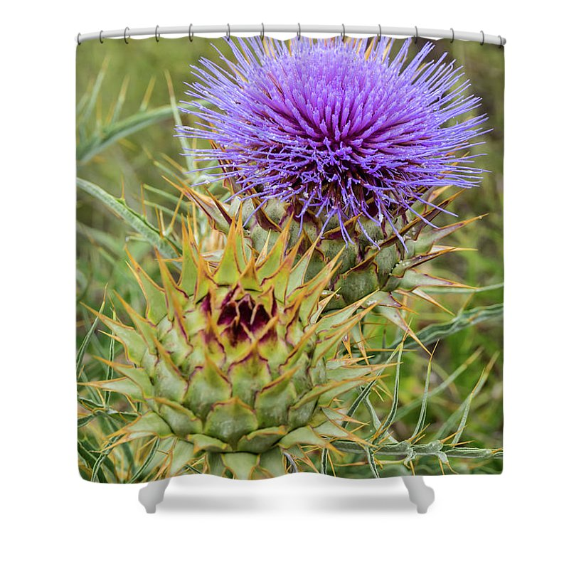 Teasel In Bloom Shower Curtain featuring the photograph Teasel In Bloom by Robert VanDerWal