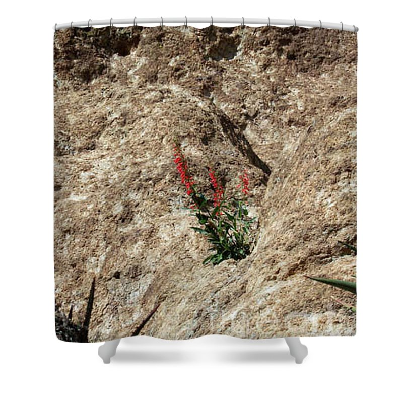 Wildflowers; Flowers Shower Curtain featuring the photograph Tenacity by Kathy McClure