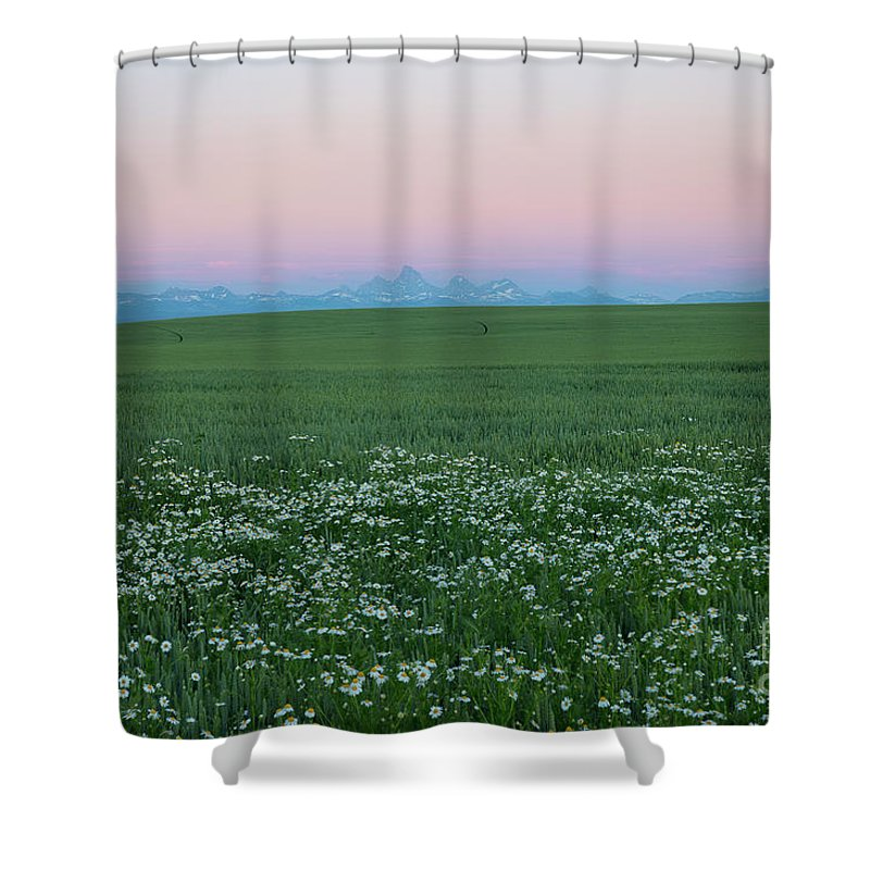 Ashton Shower Curtain featuring the photograph Tetons With Daisies by Idaho Scenic Images Linda Lantzy