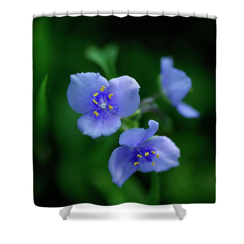 Western Spiderwort Shower Curtain featuring the photograph Texas Blues Sisters by Bill Morgenstern