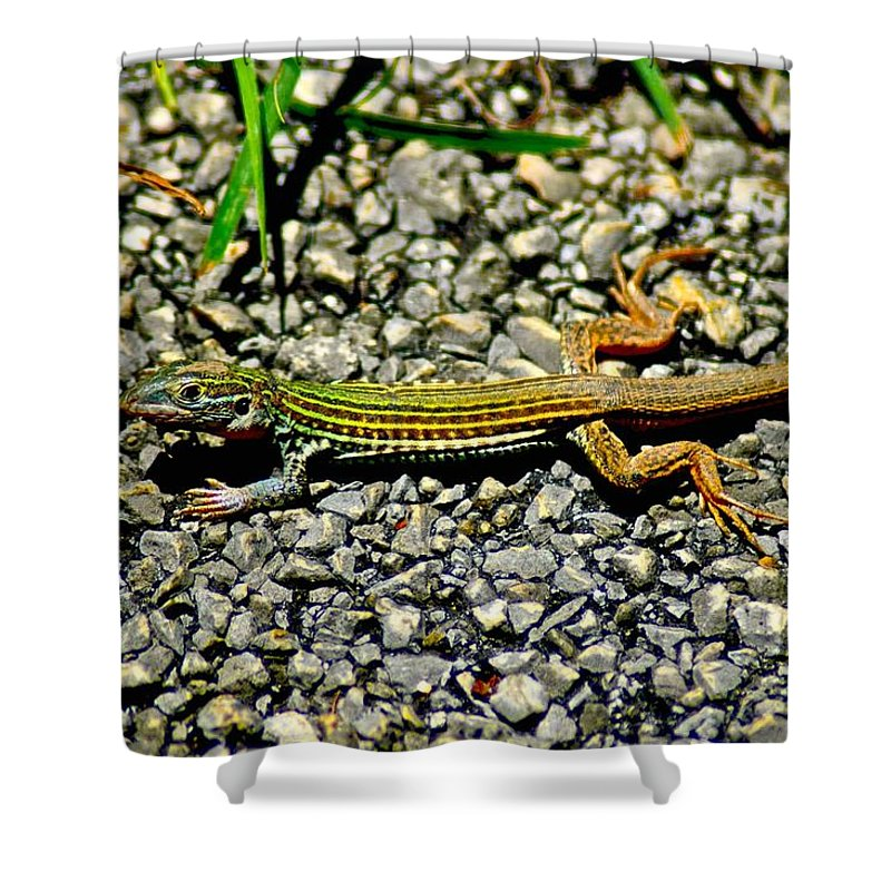 Animals Shower Curtain featuring the photograph Texas Lizard by Dale Chapel