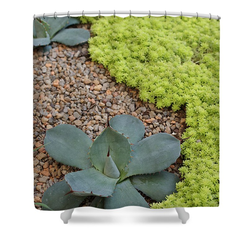Cacti Shower Curtain featuring the photograph Texture by Shelley Jones