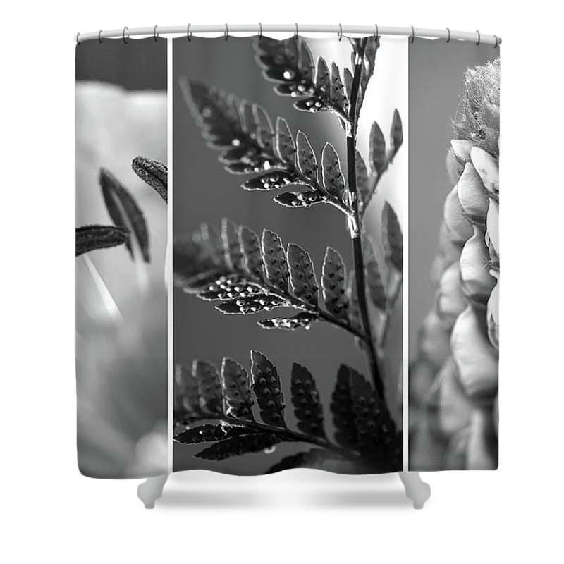 Triptych Shower Curtain featuring the photograph Texture Triptych by Lisa Knechtel