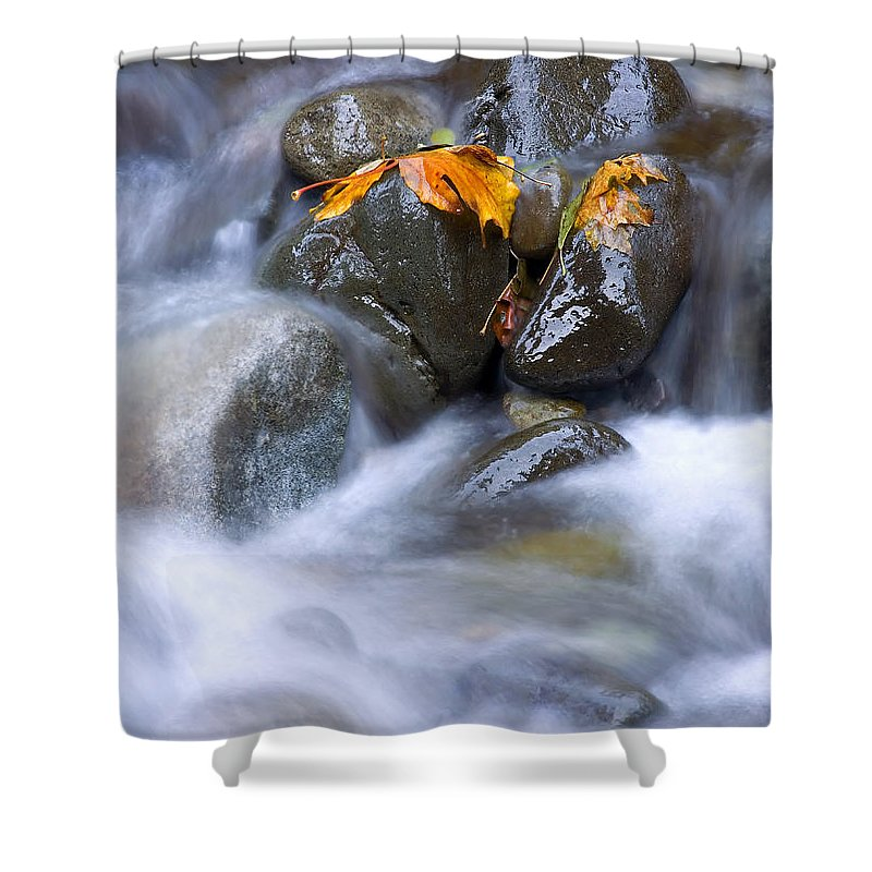 Maple Shower Curtain featuring the photograph Textures Of Autumn by Mike Dawson