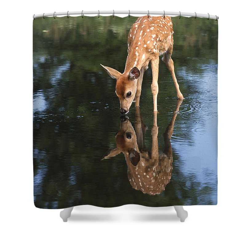 Deer Shower Curtain featuring the photograph That Must Be Me by Sandra Bronstein