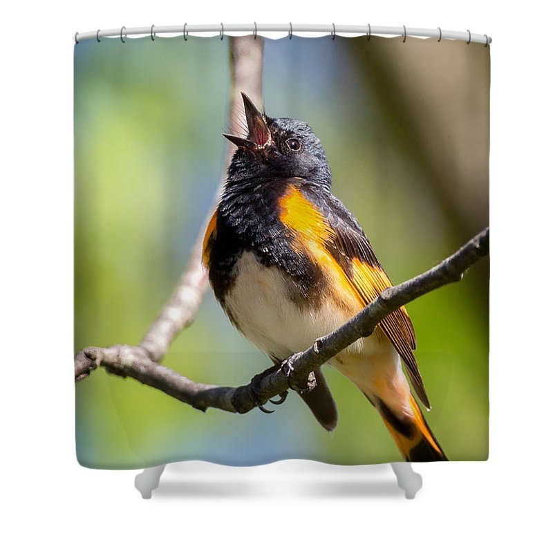 Warbler Shower Curtain featuring the photograph The American Redstart by Bill Wakeley