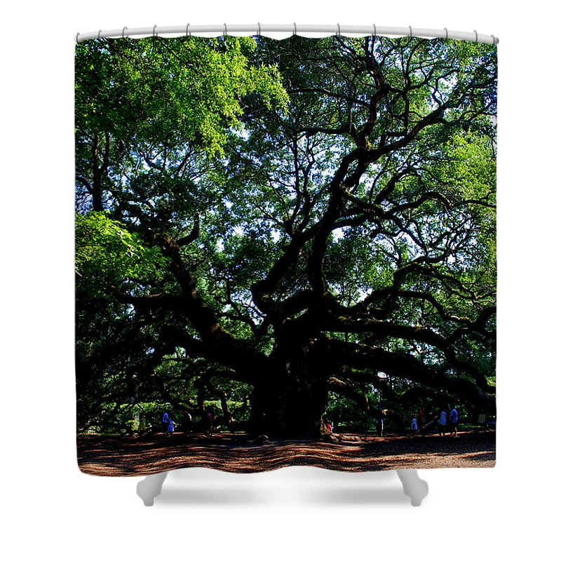 Angel Oak Shower Curtain featuring the photograph The Angel Oak In Summer by Susanne Van Hulst
